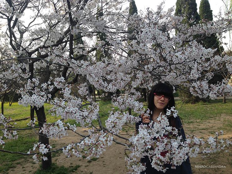 sakura_en_china_nihaocassandra02