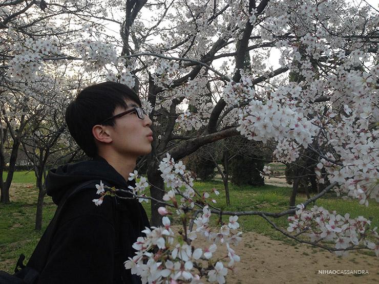 sakura_en_china_nihaocassandra09